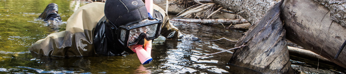 Nate Cathcart, research technician with the Alaska Cooperative Fish and Wildlife Research Unit, conducts a snorkel survey for juvenile Chinook salmon within a logjam along the Chena River, Alaska.