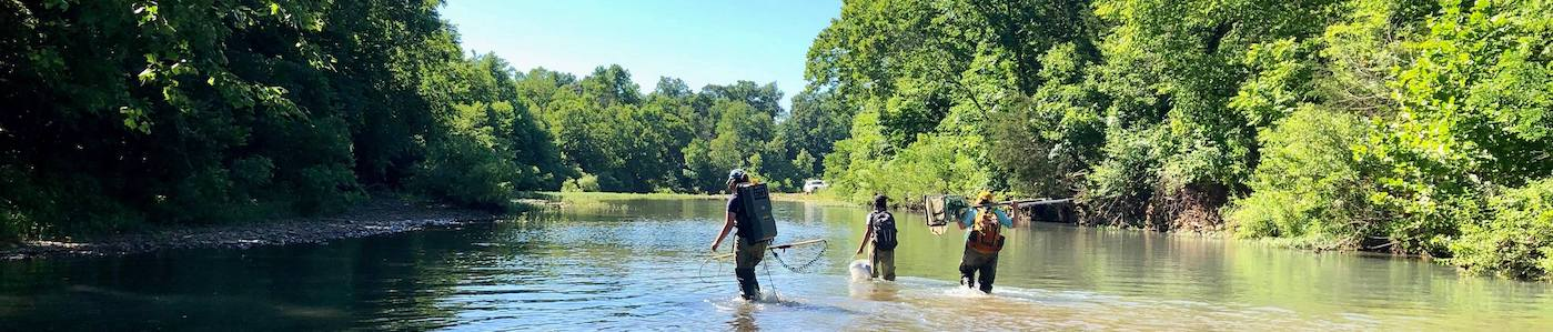 Graduate students of the Arkansas Cooperative Fish and Wildlife Research Unit use backpack electrofishers to sample the stream community.