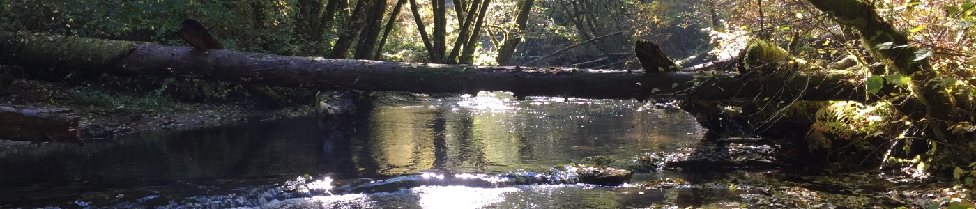 The Alsea River. Credit: Sarah Beldin, USGS