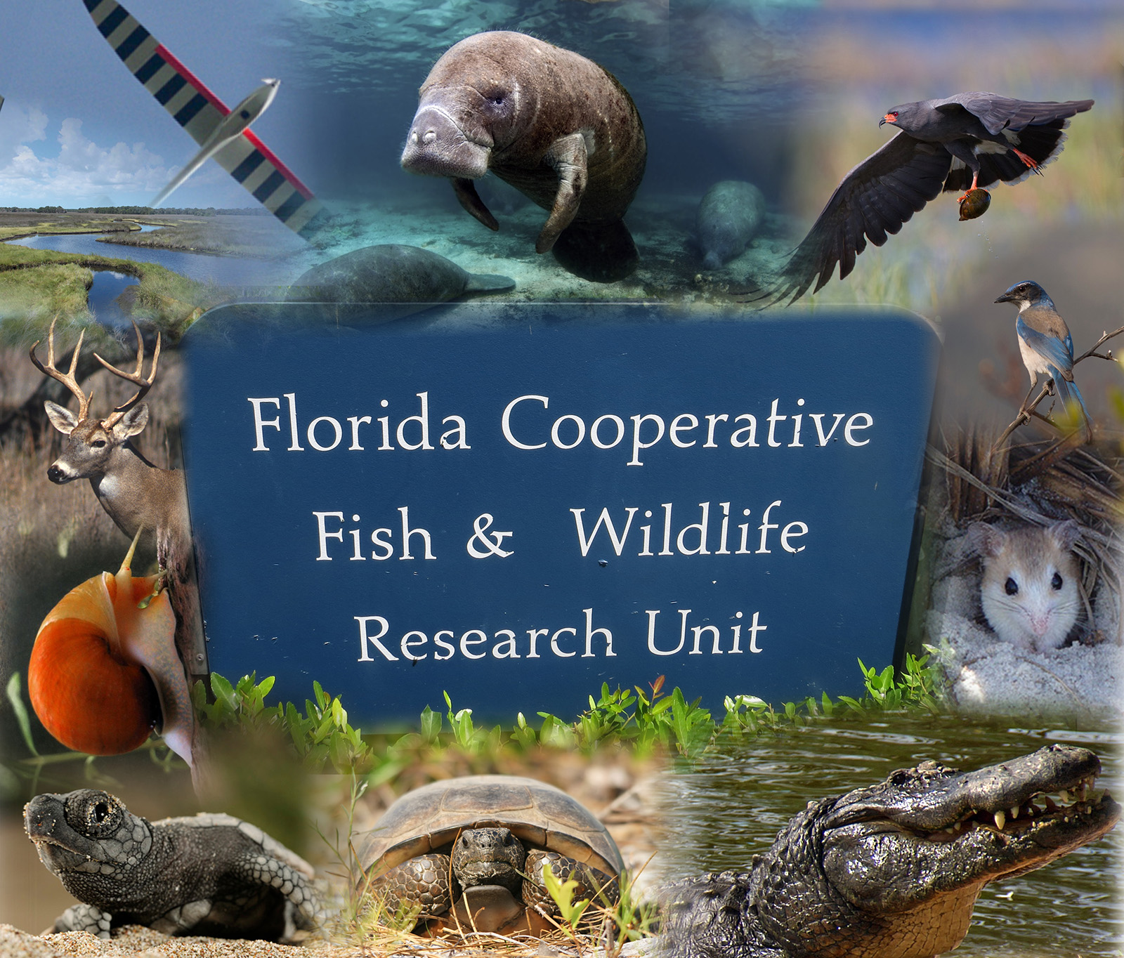 Florida cooperative fish and wildlife research unit for Fish and wildlife