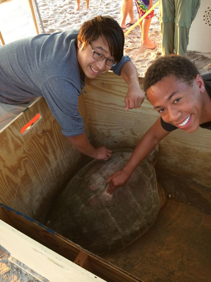 Students learn about sea turtles
