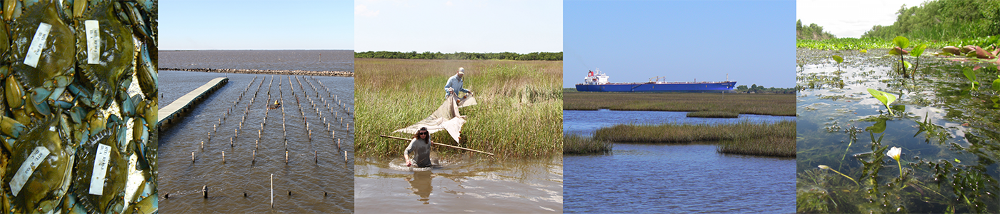 The Louisiana Unit examines coastal habitats and dependent species.  Shown from left to right are  blue crabs, aquaculture farm, seining for nekton assemblages in brackish marsh, sampling marsh along a ship channel, and a fresh marsh