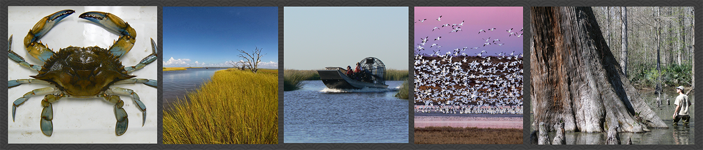 The Louisiana Unit studies wetlands and wetland-dependent wildlife to enhance their conservation and management. Shown from left to right: blue crab, dead trees from salt water intrusion, students in airboat in the marsh, snow geese arising at dawn from a wetland at Bitter Lake National Wildlife Refuge, and a student examining a massive baldcypress tree at Cache River National Wildlife Refuge.