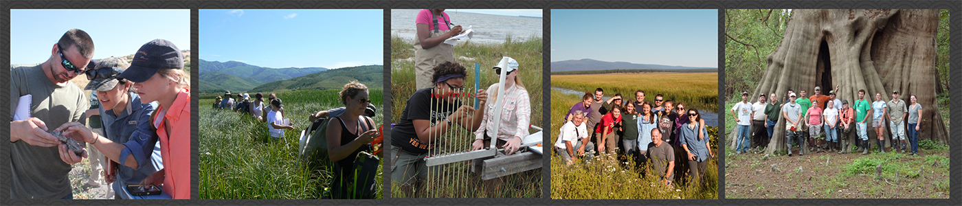 Field-based teaching in a variety of settings is used to expose students to a wide range of wetland systems and socioeconomic settings. From left to right: 1) Students study a fossil in an ash layer buried in soil at Lower Klamath National Wildlife Refuge, OR; 2) Exploring the marsh at Grays Lake National Wildlife Refuge, ID; 3) Learning to read a surface elevation table at Appalachicola National Estuarine Reserve, FL; 4) Capturing a moment at Klamath Marsh National Wildlife Refuge, OR; and 5) Visiting the national champion baldcypress tree at Cat Island National Wildlife Refuge, LA.