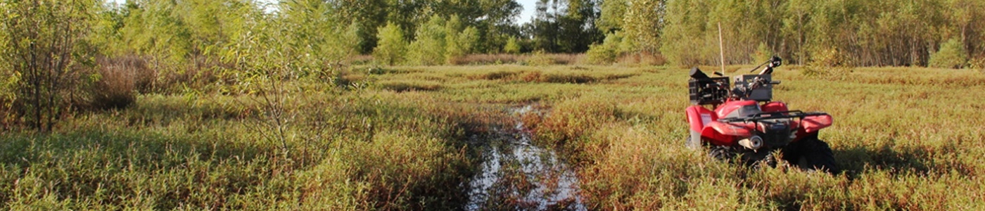 Actively managed wetland in Missouri