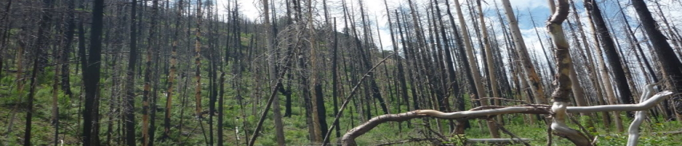 Anticipated recovery from wildfire will be long term