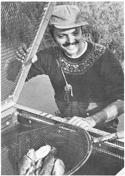 Unit leader Dr. Summerfelt samples cage-reared channel catfish which have been fed a formulated feed containing dehydrated cattle paunch.  (Research Reports vol. 9, issue 5, Sept-Oct 1973, Oklahoma State University Research Foundation)