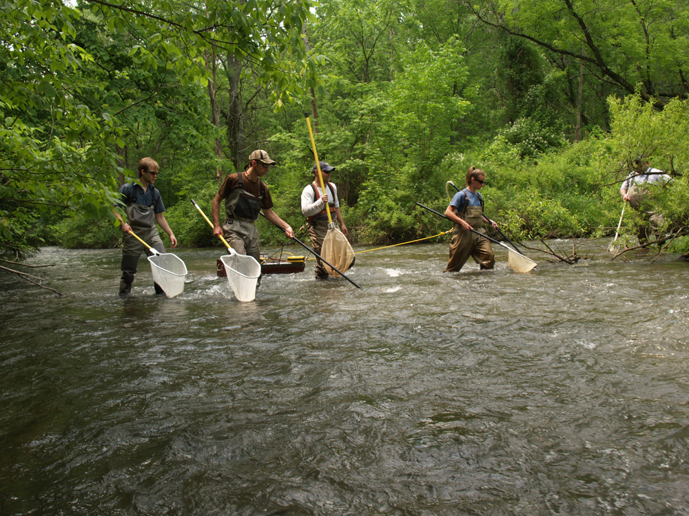 Electrofishing brown and rainbow trout in Spruce Creek in central Pennsylvania