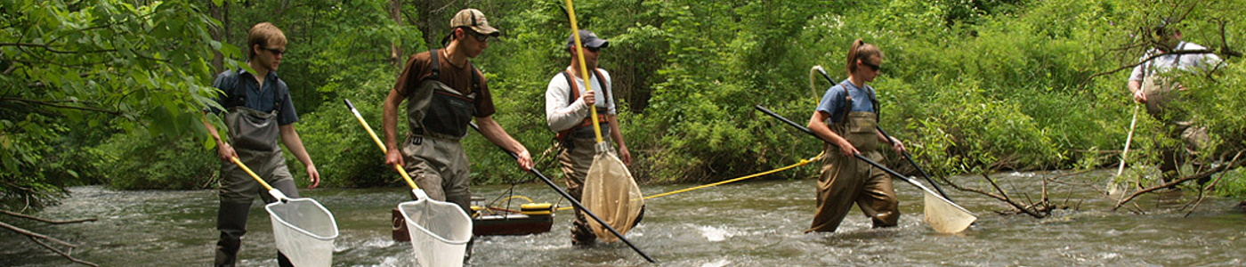 Pennsylvania staff electrofishing brown and rainbow trout in Spruce Creek in central Pennsylvania.