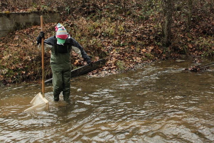 MS student, Alison Anderson, collecting macroinvertebrate samples