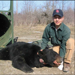 New York Unit student Mike Wegan, with anesthetized adult black bear captured as part of collaborative eff ort with the U.S. Army's Fort Drum Military Installation in northern New York and New York State's Department of Environmental Conservation to assess population size, movements, and foraging habitats of bears.